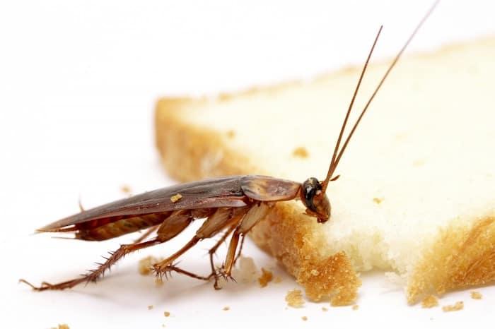 5 Cosas que necesitas saber sobre la alergia a las cucarachas