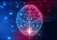 Certaines études sur des porcs suggèrent que certaines fonctions cérébrales pourraient se rétablir après la mort